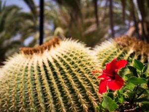 tuin aanleg en onderhoud costa blanca